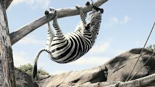 Смешные видео про животных .Новинка 2017 Часть 1
