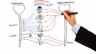 Pharmacology - AUTONOMIC NERVOUS SYSTEM (MADE EASY)