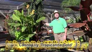 Outdoor Tropical Plants: Part 3