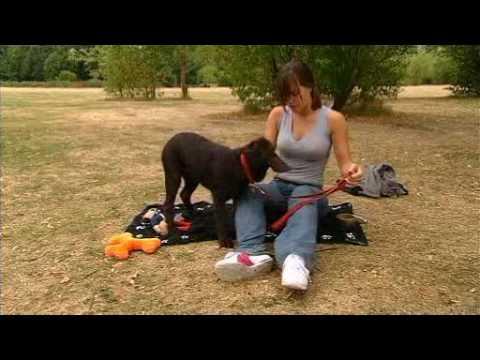 Celebrity Dog School  Michelle Ryan 1