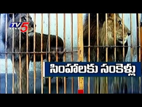 Police Arrests 18 Lions For Accused Of 3 Dead | Gujarat | TV5 News