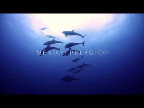 México Pelágico | Trailer (2) Español