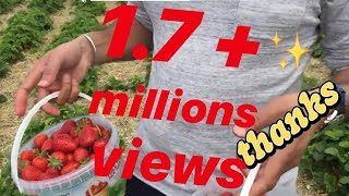 England vich punjabi mundy hard working in farms. funny video
