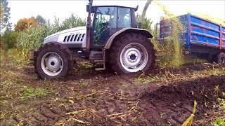 kukurydza na Kaszubach 2017 NA 11 ZESTAWÓW I 2 SIECZKARNIE