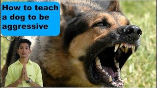How to teach a dog to be aggressive | Guard dog training | Question of the day|