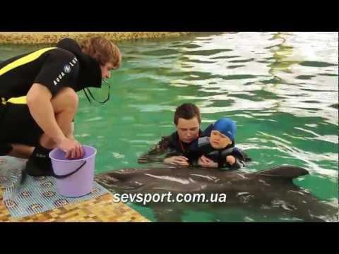Дельфинотерапия в Севастополе