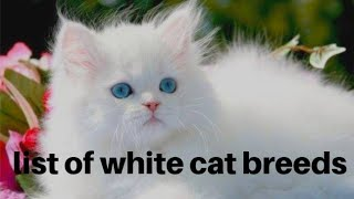 List of white cat breeds