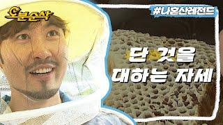 벌은 너무 무섭고, 꿀은 너무 좋은 홍철이의 양봉체험 | 나혼자산다⏱오분순삭 MBC130830방송