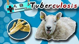 Tuberculosis ( Tan antigua como la vida misma ) |Enfermedades de los animales|