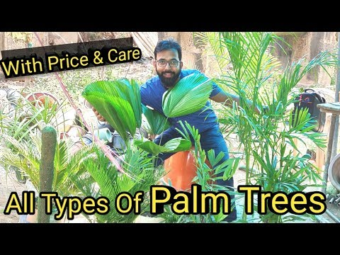 All Types Of Palm Trees | How To Grow Variety Of Palm Trees In India | #Palm Care & Price
