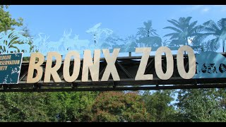 Visiting Animals in Bronx Zoo | in the Bronx | New York City | United States
