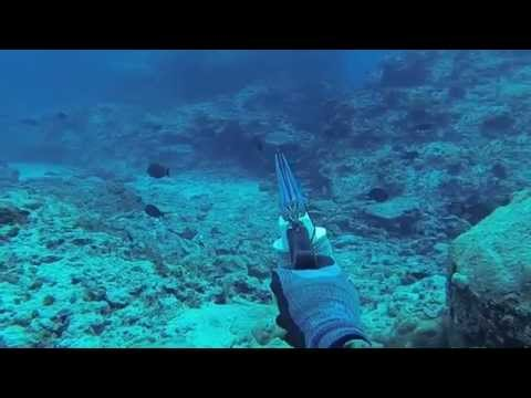 Spearfishing Coral Sea 2014 (Willis Island)