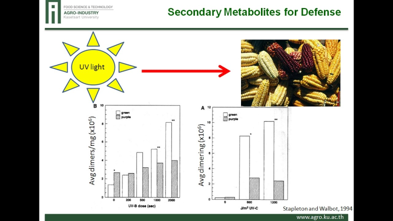 Potential Biofunctionality of Hidden Components in Food