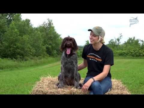 Bird Dog Boot Camp: From Pup to Pointer