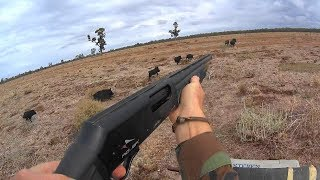 Western pig hunt 2018