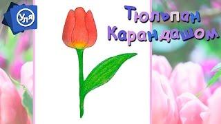 Как нарисовать тюльпан // Цветы карандашом // Для начинающих(Как нарисовать тюльпан // Цветы карандашом https://www.youtube.com/watch?v=qejgZfCl958&feature=youtu.be У нас с Ульяшей тюльпаны ассоци..., 2016-02-19T12:17:53.000Z)
