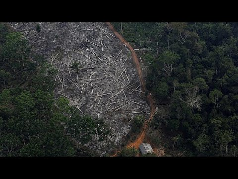 Euronews:Brazilian government defends record on Amazon deforestation