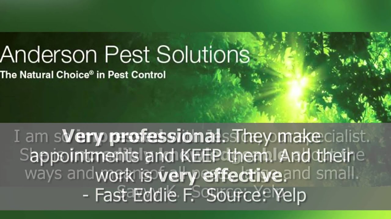 Anderson Pest Solutions Reviews Chicago Il Control