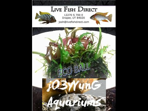 Live fish direct and jo3y yung aquariums eco ball for Live fish direct