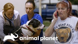 Perro arrastrado por inundación es encontrado vivo | Pit bulls y convictos | Animal Planet