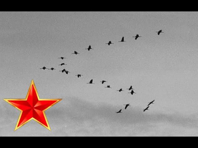 Журавли – Песни военных лет – Лучшие фото – Мне кажется порою что солдаты