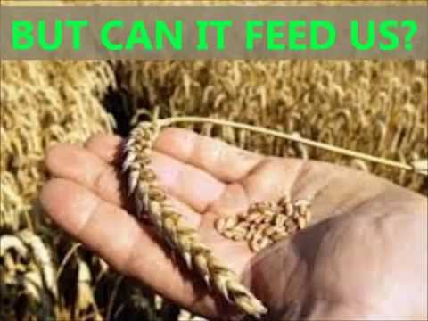 Industrial Agriculture vs. Sustainable Agriculture