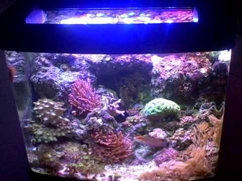 Auraled LED Reef Lighting System 29 u0026 13 Biocube w/ LPS SPS Corals & Auraled LED Reef Lighting System 29 u0026 13 Biocube w/ LPS SPS Corals ...