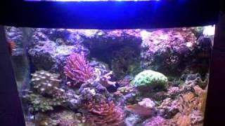 auraled led reef lighting system 29 13 biocube w lps sps corals