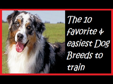 Easiest Dog Breeds To Housebreak