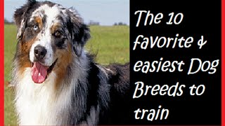 The 10 Favorite & Easiest Dog Breeds To Train