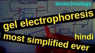 """Gel electrophoresis """" most simplified""""   Hindi"""