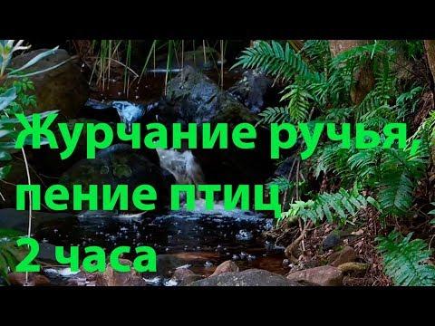 Звуки природы, журчание ручья, пение птиц. 🐠 Красивый лесной ручей 2 часа. 🐠 Лесной релакс
