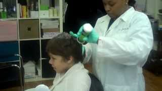 Where do head lice come from?