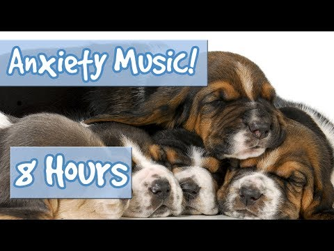 SLEEP MUSIC FOR ANXIOUS DOGS – 8 Hour Playlist to Relax Nervous Dogs and Puppies with Anxiety 🐶 💤