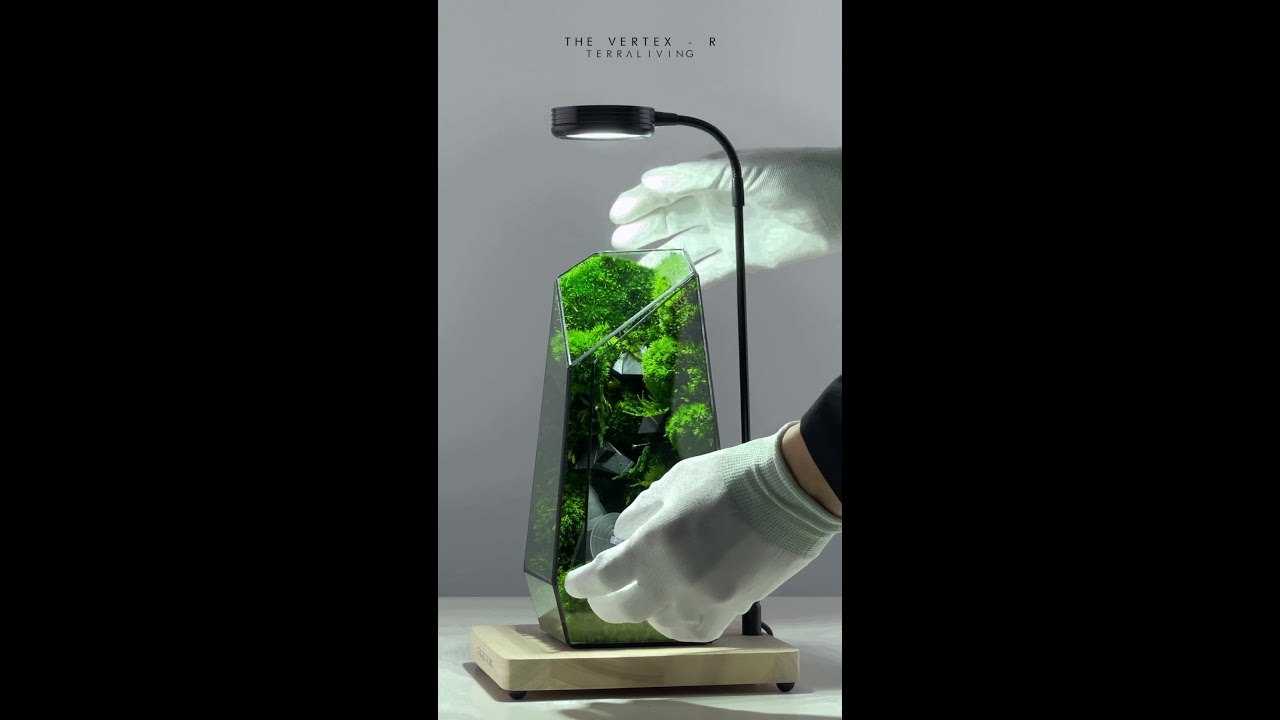 The Vertex - R, preserved moss terrarium with tessellated sculpture by TerraLiving
