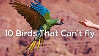 10 Birds Cannot fly names and images