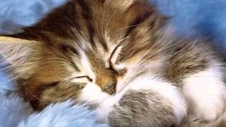 Kedi ÖZLEDİ