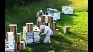 Пчеловодство в Канаде(Видео фильм об пчеловодстве в Канаде. Пчеловодство в Украине http://pchelu.com.ua/, 2013-02-12T16:49:48.000Z)