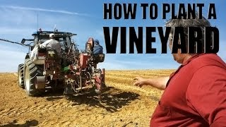 How to plant a Vineyard (Mechanical transplanter and traditional way)