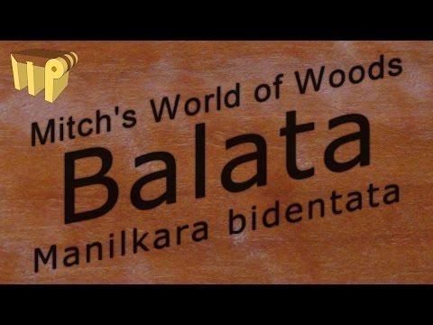 Balata (manilkara bidentata) - Mitch's World of Woods