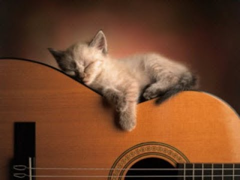�� �� Музыка для кошек и котов! Успокойте ваших кошек музыкой, помогите котам спать!