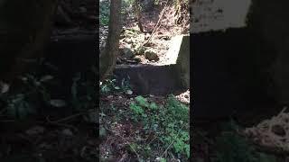 立花山 カエルの声