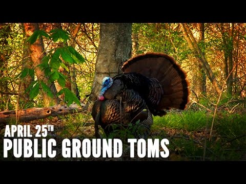 Cabela's Spring Thunder | Public Land Turkey Hunting In Missouri