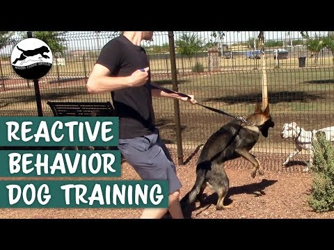 Stop Your Dog's Reactive Behavior On-Leash