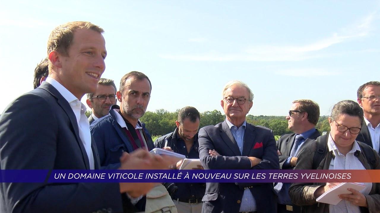 Yvelines | Un domaine viticole installé à nouveau sur les terres yvelinoises