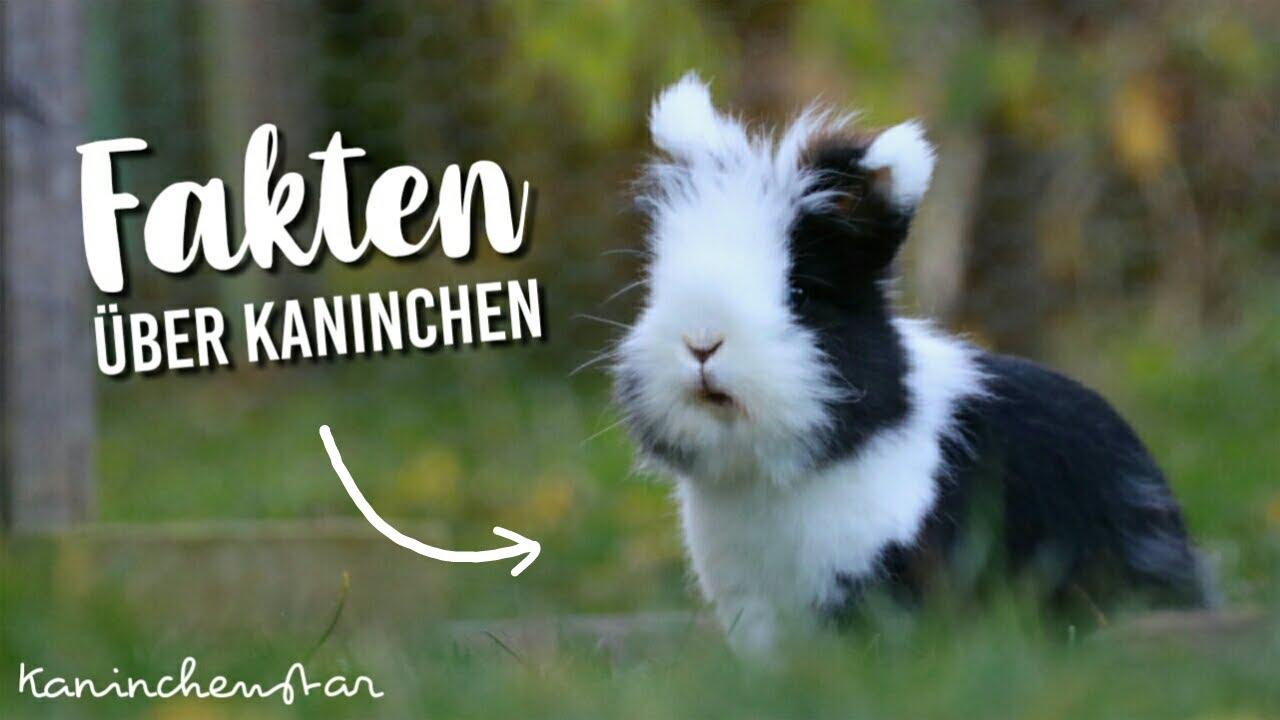 8 FAKTEN über Kaninchen, die du vielleicht noch nicht kennst    Kaninchenstar