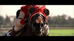Seabiscuit - Final Race
