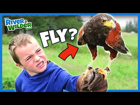 BOYS FLY HAWKS, TRAIN FALCONS AND LEARN ABOUT FALCONRY
