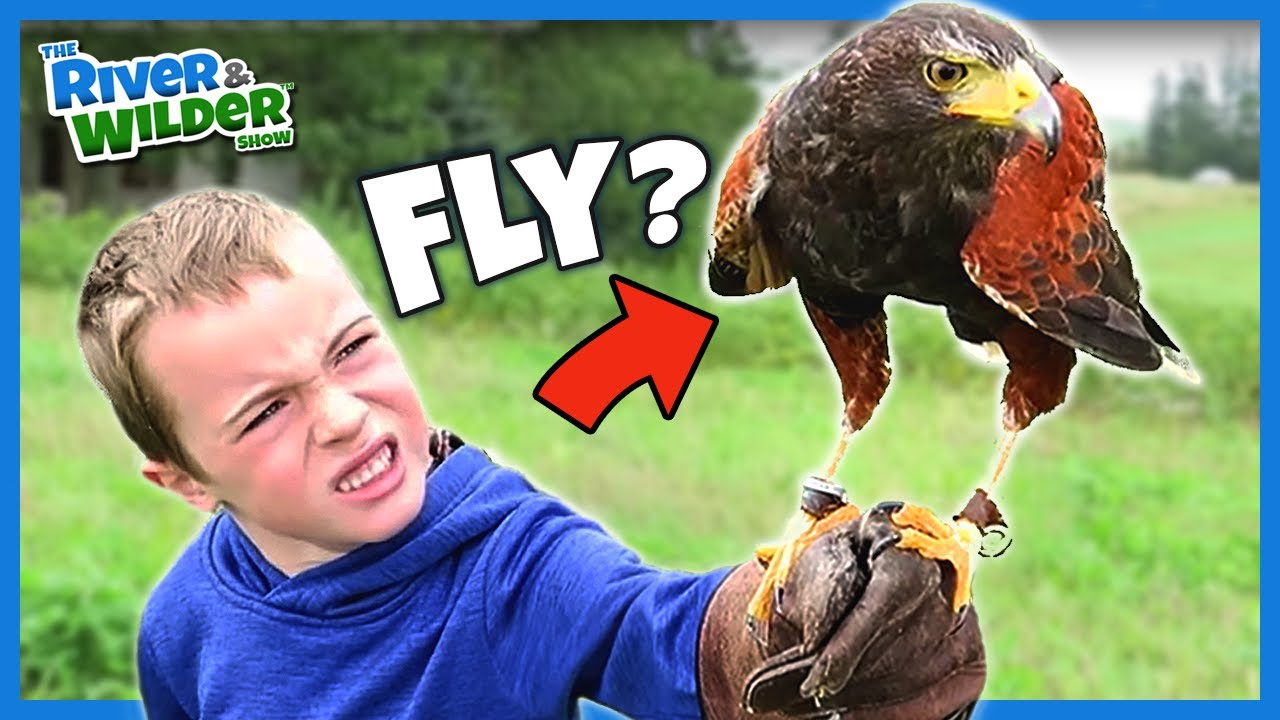 Boys Fly Hawks Train Falcons And Learn About Falconry Youtube