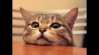 10 любопытных фактов о кошках
